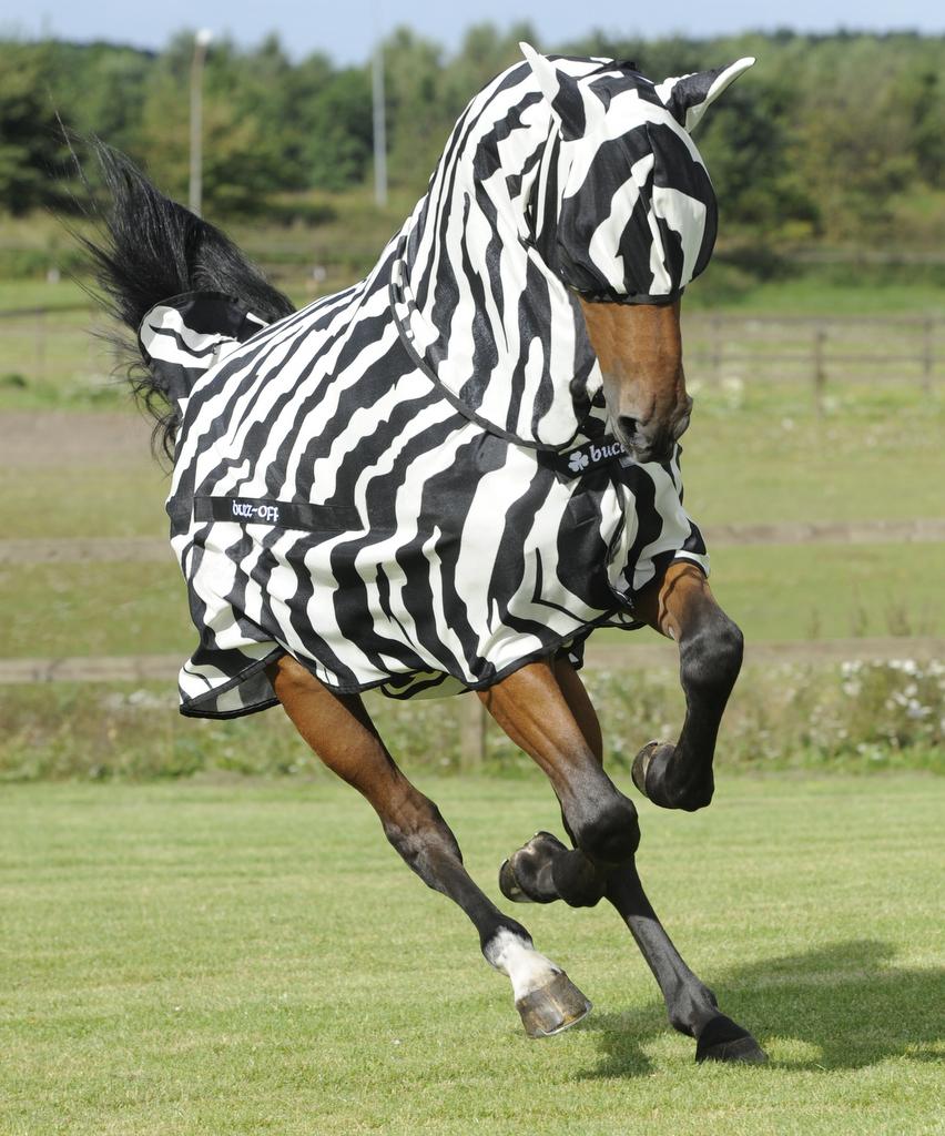 Bucas Launch New Zebra Stripe Fly Sheet