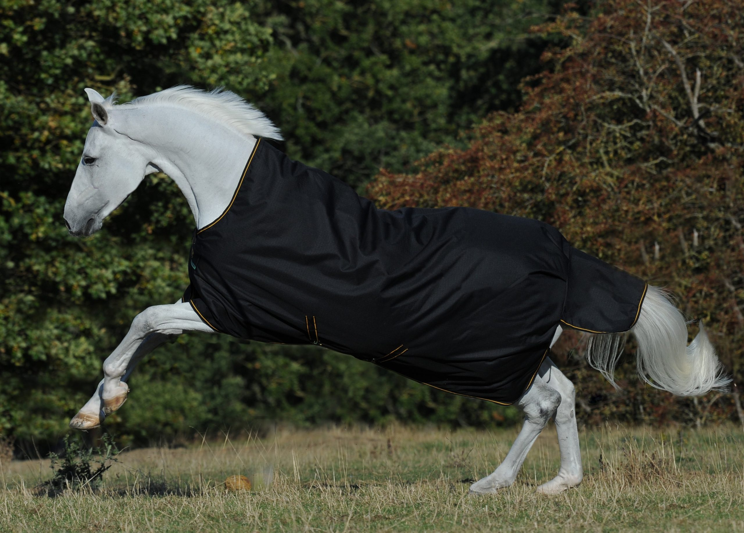 Bucas Irish Turnout Extra 300g Pony 1200d-Black//Gold